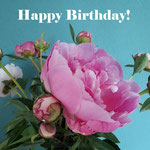 Losse ansichtkaart 'Happy birthday'