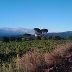 "04.09.2009: Traumblick in die Weinberge kurz vor ""Villafranca del Bierzo"""