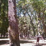 21.08.2009: Tolle Bäume kurz vor  Burgos