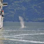 So nah an den Schiffen hätten wir den Wal nicht erwartet.
