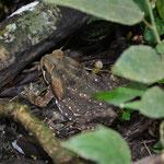 Fast spannender fanden wir da diesen Frosch...