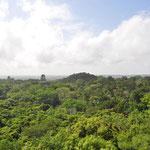 Super Aussicht über den Petén vom Tempel IV. Einzelne andere Tempel ragen über das Blätterdach hinaus.