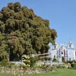 Der ca. 2000 Jahre alte Baum ist mit einem Stammdurchmesser von 14 Metern einfach riesig!