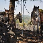 Unsere Pferde dürfen sich eine erste Pause gönnen.