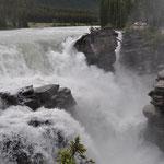Gewaltige Athabasca Falls, fast ein wenig angsteinflössend.