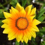 Angi's Blumenstudie, Teil 2