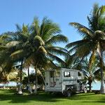 Ein toller Platz unter Palmen.