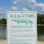 Schwimmen trotz Alligatoren?