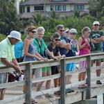 Wir beobachten Delfine und das eifrige Treiben auf dem Steg.