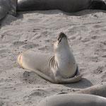 Auch die Seelöwen geniessen die Sonne.