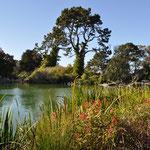 Kleiner See im Golden Gate Park - mit Bootsverleih.