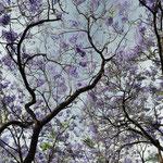 Angi's geliebte Bäume...