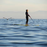 SUP - Stand Up Paddling, in Kalifornien DER TREND schlechthin!