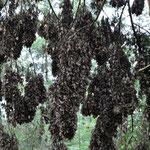 Es war noch zu kalt, die Schmetterlinge hingen in grossen Trauben rum und froren sich wohl was ab.