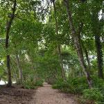 Der Weg führt durch tropische Vegetation, immer der Küste entlang.