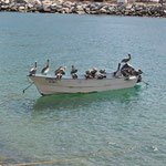 Pelikane lieben Boote...