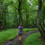 Zu Fuss ging es vom Campingplatz erst durch den Wald, dann zur Metro.