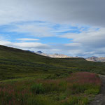 Tolle Landschaft im Denali Nationalpark.