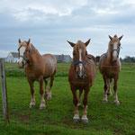 Die Pferde wünschten sich auch angenehmeres Wetter.