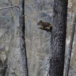 Eichhörnchen auf Aussichts-Ast