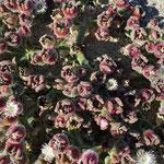 Angi entdeckte eine coole Pflanze, bei genauem Hinschauen sieht man kleine, sich im Sonnenlicht spiegelnde Kügelchen.