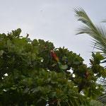 Immer wieder zogen wunderschöne Papageien vorbei.