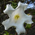 Angi's Blumenstudie, Teil 3