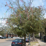 Die farbigen Mardi Gras Ketten hingen noch überall... in den Bäumen, an Gartenzäunen, Strassenlampen...