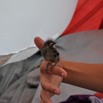 Den aus dem Nest gefallenen Vogel Lisa hatte die Familie gefunden. Marina päppelte ihn dann liebevoll auf.