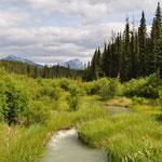 Wabasso Creek wetlands, auf dem Weg zum ersten See.