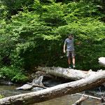 Claudio kraxelte auf den Baumstämmen ans andere Ufer. Eine Schlange im Gebüsch brachte ihn aber dazu, wieder zurückzukommen.