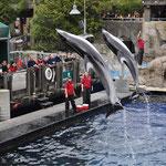 Delfinshow im Vancouver Aquarium