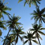 So hohe Palmen haben wir noch selten gesehen...