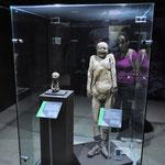 Im Vordergrund: Die kleinste Mumie, ein noch Ungeborenes.
