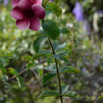 Angi's Blumenstudie, Teil 1