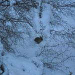 Doch nicht alles im Winterschlaf... ein Hase hoppelte davon, als er uns kommen sah.