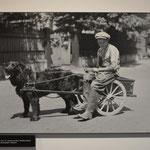 Ein Junge mit seinem Neufundländer-Hund.