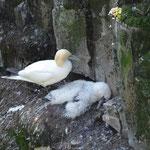 Dieses Vogelbaby hat es leider nicht geschafft...
