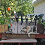 Jaska hängt auf der gemütlichen Terrasse herum.
