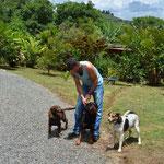 Die vier Hunde sind aus dem Häuschen. Beat und Claudio nehmen sie auf einen Spaziergang mit.