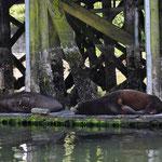Faule Seelöwen - wann gibts Fisch?