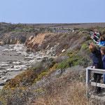 Wir beobachten die Seelöwen.
