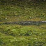 Immer wieder sehen wir Krokodile in irgendwelchen Tümpeln. Langweilig liegen sie meist im Wasser...