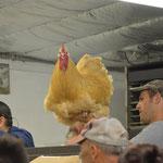 Ein stattlicher Hahn wird versteigert.