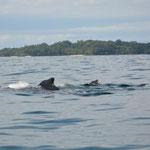 Die Mutter und ihr Junges schwimmen nebeneinander davon...