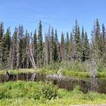 Moose Pond - leider heute ohne Moose.