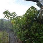 """Der fast schon übliche """"Nachmittags-Regen"""" kam und ging immer schnell."""