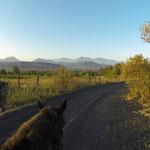 Zuerst waren wir noch frühmorgens im Dunkeln unterwegs. Hier reiten wir mit den ersten wärmenden Sonnenstrahlen immer näher dem Vulkan entgegen.