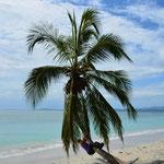 Angi hängt sich derweil an die Palme. Sie würde sich auch gut machen als Faultier :-)