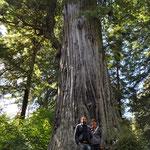 Wie Zwerge fühlten wir uns unter dem Big Tree.
